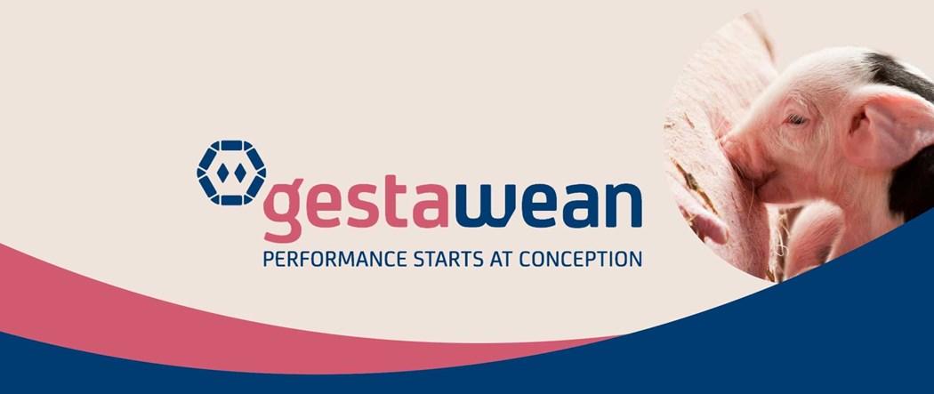 Gestawean banner