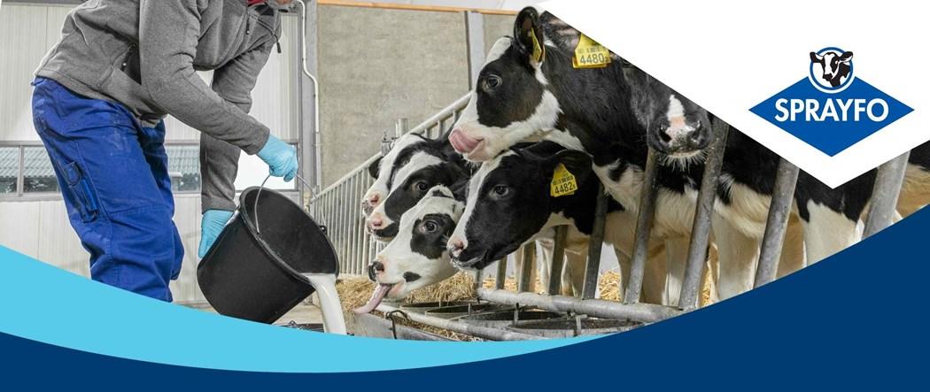 Sprayfo calf rearing solutions, for the best LifeStart