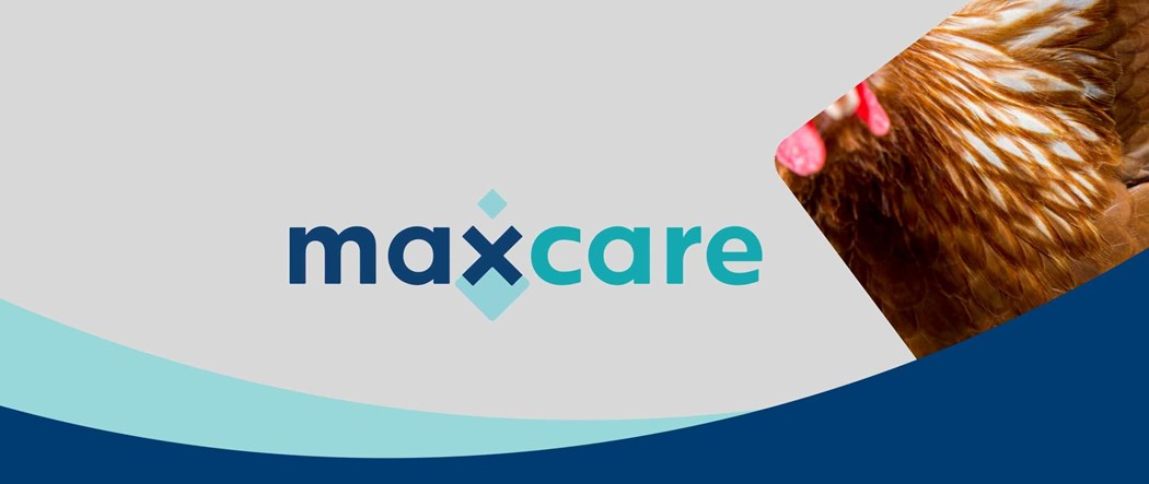 Enrich livestock nutrition with Maxcare feed supplements
